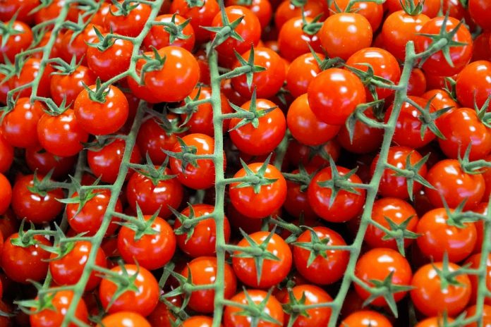 Ripe tomatoes are considered a good food choice